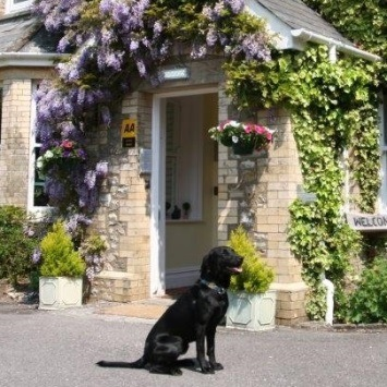 best-dog-friendly-hotels-in-devon-355